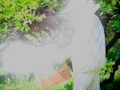 14_apiculteur3